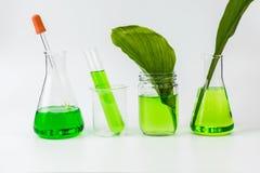 Botanica organica naturale di erbe Immagini Stock