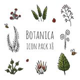 Botanica - stylized eight items colored icon set consisting of plants, mushrooms and insects. On white background, hand drawing Stock Photos