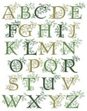 Botanical Alphabet/eps. Hand-drawn alphabet with leafy green vines entwined with capital letters...suitable for drop caps or monograms Stock Photos