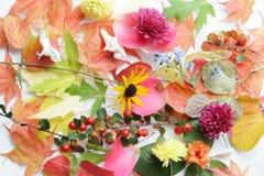 Botanical background stock images