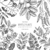 Botanical background with beautiful myrtle plants sketches. Hand drawn feijoa, Eucalyptus, tea tree, guava, myrtus drawings. Exoti. C trees design template with stock illustration