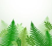 Botanical background with fern. Branches Stock Image