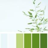 Botanical background of field plant Stock Photo