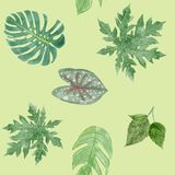 Botanical background of Green leaves tropical plants. Stock Photography
