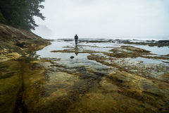 Botanical Beach, Juan de Fuca Trail, Port Renfrew, BC, Vancouver Royalty Free Stock Photo