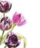 Botanical blank for text. Watercolor Tulips flowers. Perfect for invitation, wedding or greeting cards. vector illustration