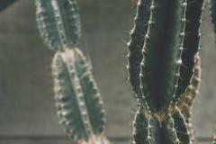 Botanical, Cactus, Close-up, Green Stock Photos