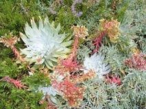 BOTANICAL CACTUS FLOWER GARDEN Stock Images