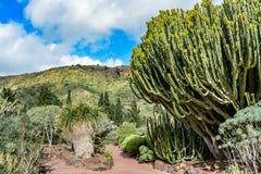 Botanical cactus garden on a cloudy day Royalty Free Stock Photos
