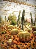 Botanical, Cactus, Plant Stock Image