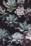 Botanical, Cactuses, Close-up, Colors Stock Images