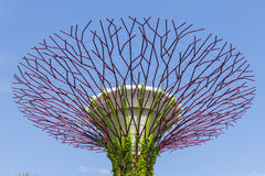 The Botanical closeup of garden by the bay Stock Photography