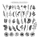 Botanical collection. Flowers, branches, and leaves. Hand drawn. Design elements. Nature vector illustration vector illustration