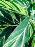 Botanical Royalty Free Stock Photography