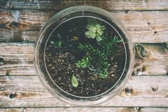 Botanical, Decor, Design Stock Image