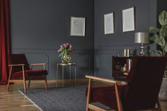 Botanical drawings on a dark gray wall in the corner of a luxurious living room interior with rich, red armchairs and curtain stock photos