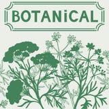 Botanical floral background. Illustration with botanical plants. Vintage style. Monochrome vector illustration Royalty Free Stock Image