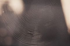 Spider web, The Spider Web close up. Stock Photos