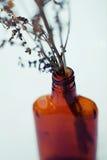 bouquet flowers in glass bottle. instagram toned. orange color, green vase, flora, bouqet of orange flowers, nature, botanical, be Royalty Free Stock Image