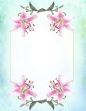 Botanical flower  Tiger Lily framed invitation card stationery Stock Images