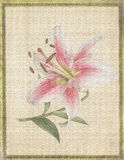 Botanical flower  Tiger Lily on parchment Stock Photo