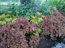 Botanical Flowers Garden Royalty Free Stock Photo