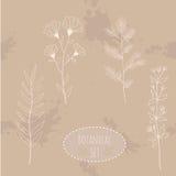 Botanical flowers set elements. Hand drawn. Illustrations Stock Photography