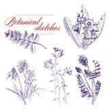 Botanical flowers Stock Photography