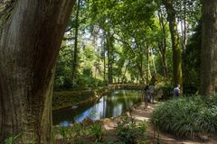Botanical forest garden in sintra stock image