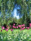 Botanical garden. Tulips in botanical to a garden stock image