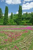 Botanical garden. In the summer time Royalty Free Stock Image
