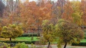 Botanical garden stock video