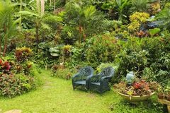 Botanical garden in Barbados,  Caribbean Stock Photo