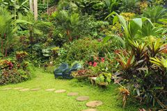 Botanical garden in Barbados,  Caribbean. Lush botanical garden in Barbados, Caribbean Stock Photos