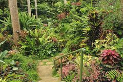 Botanical Garden, Barbados, Caribbean royalty free stock photography