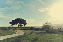 Botanical garden of Barcelona on a sunny day, retro style Stock Images
