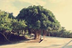 Botanical garden of Barcelona on a sunny day, retro style Stock Image