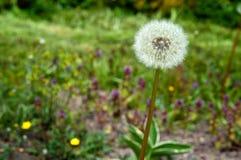 Tulip, flower, spring, garden, bloom, blossom, flora, botany stock images