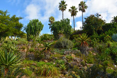 Botanical garden in Blanes Royalty Free Stock Photography