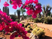 Botanical garden Botanicactus near Ses Salines on Mallorca cactus garden. royalty free stock images
