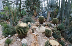 Botanical garden with cactus Stock Image