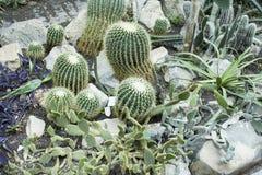 Botanical Garden, Cactuses in Glasshouse Royalty Free Stock Photos