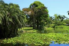 Botanical garden in Durban, South Africa Royalty Free Stock Image