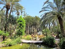 Botanical Garden in Elx in Spain - Palmeral de Elche Royalty Free Stock Photo