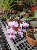 Botanical garden. royalty free stock photo