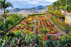 Botanical garden in Funchal on a cloudy day Royalty Free Stock Photo