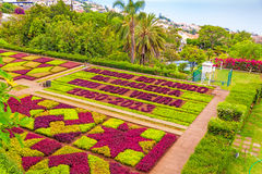 Middleton Plantation Sc Azalea Garden In Bloom Editorial Photography Image 30028967
