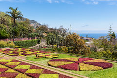 Botanical garden of Funchal at Portugese Madeira Island Royalty Free Stock Images