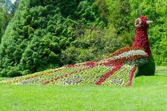 Botanical Garden, Garden, Flora, Grass stock photos