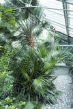 Botanical Garden,  in a Glasshouse Stock Image